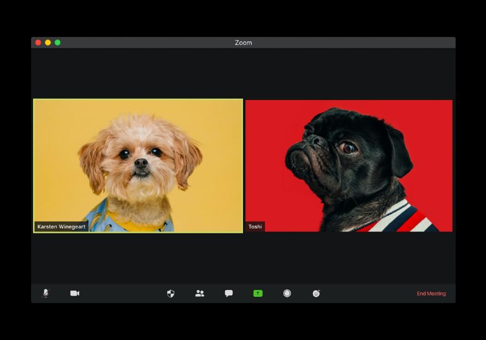 zoombombing dogs