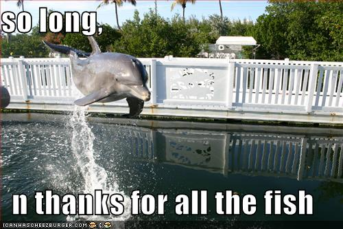 funny-pictures-dolphin-jump-all-the-fish.jpg