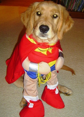 best dog in costume