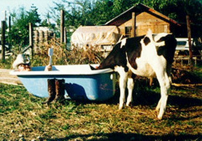 cow and tub