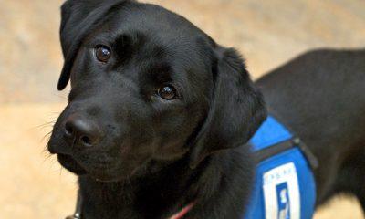 service animal dog