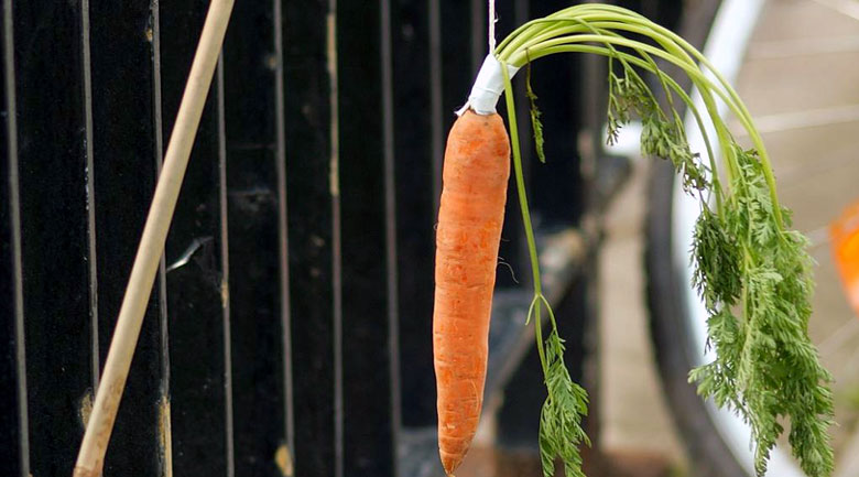 startup life and the dangling carrot