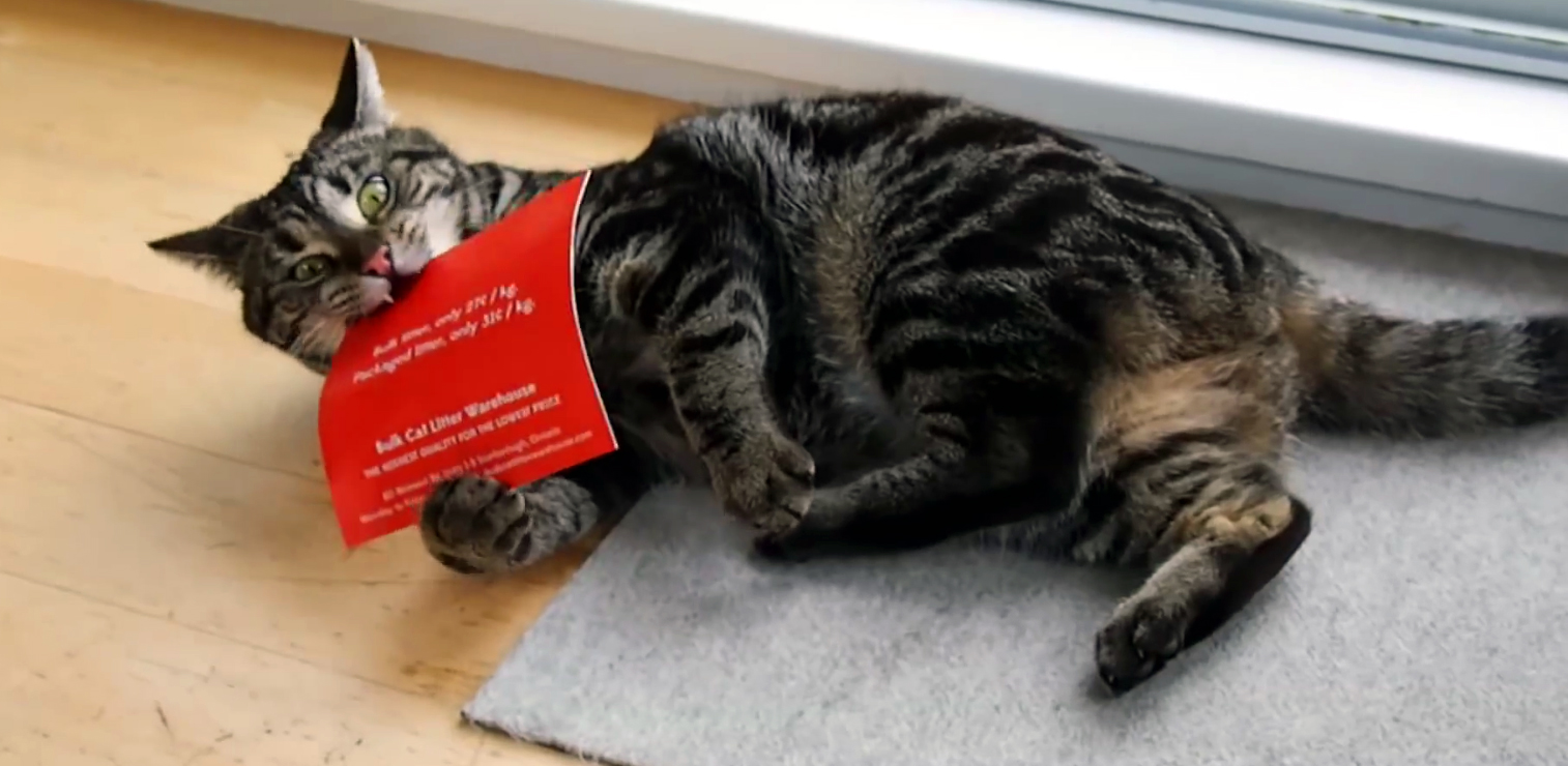 direct mail marketing kitteh
