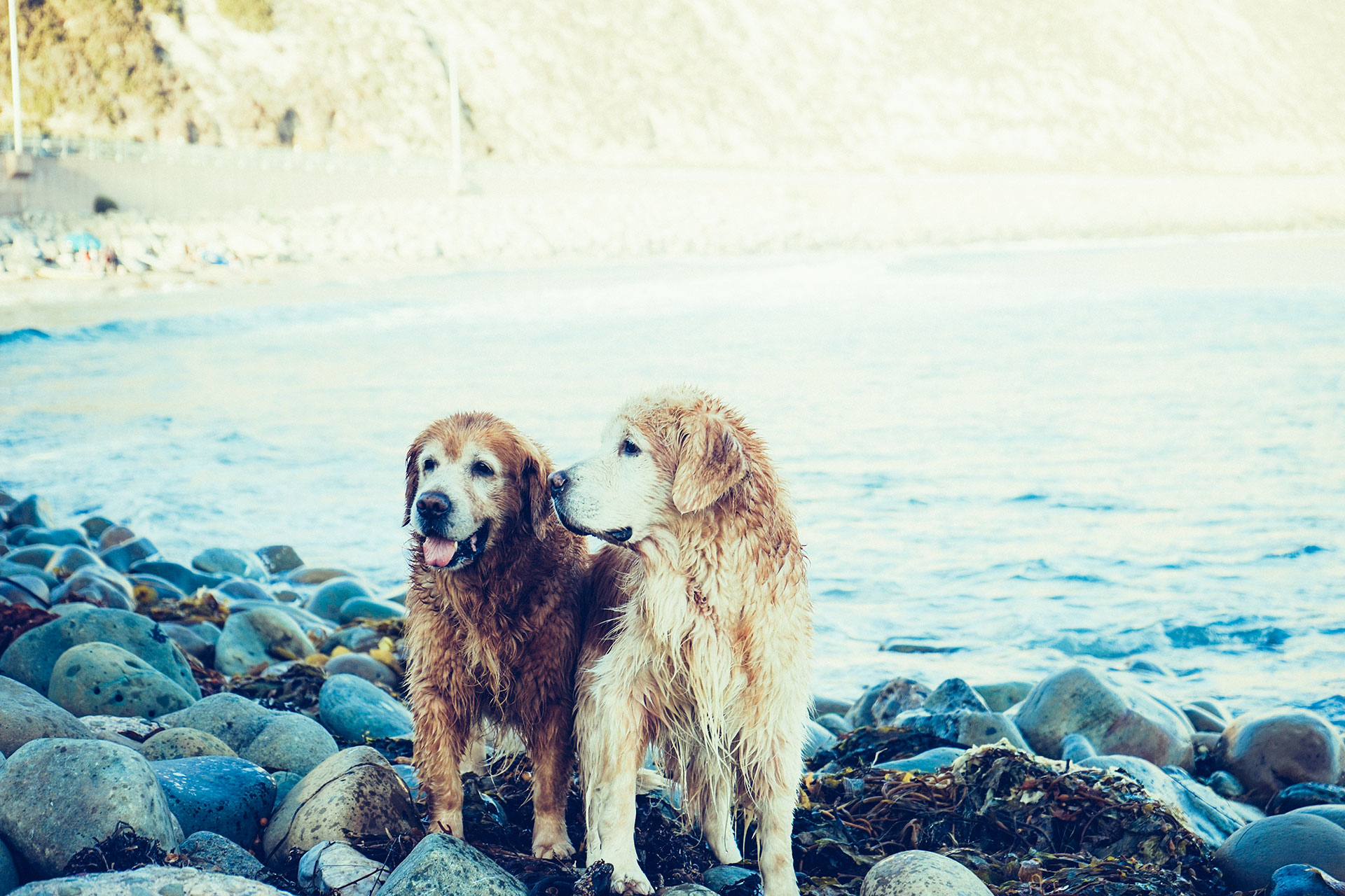 vacation doggies