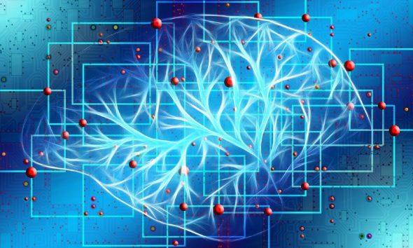 brain mapping
